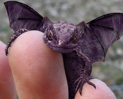 Вышивка. Дракон.